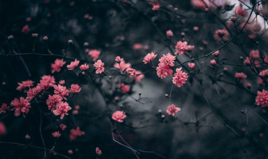 உலகம் கொஞ்சம் ஏற்றுக்கொள்ளட்டும் – கவிதை